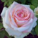 110_biedermeier_garden_2_125.jpg