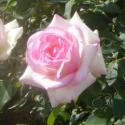 110_biedermeier_garden_3_125.jpg