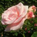 263_flamingo_2_125.jpg