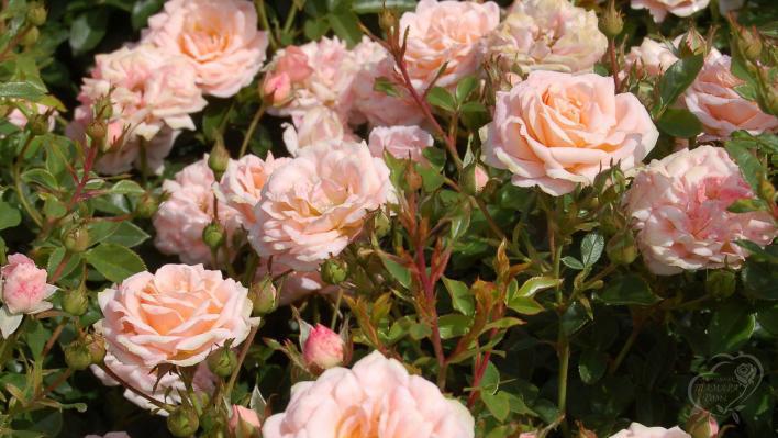 313_peach_clementine_1_708.jpg