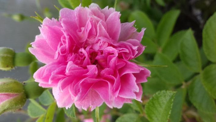 584_pink_grootendorst_2_708.jpg