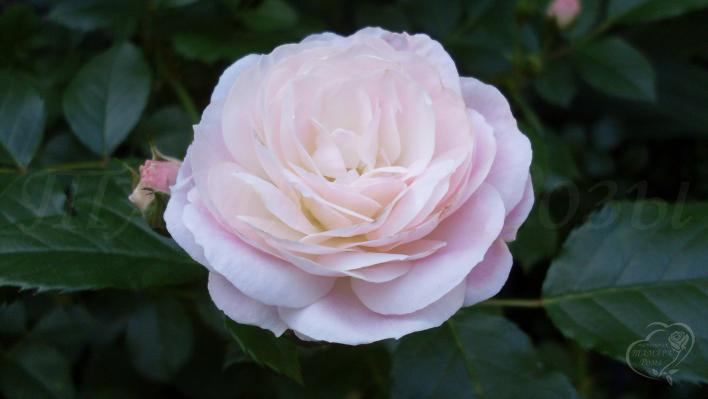 630_bouquet_parfait_1_708.jpg