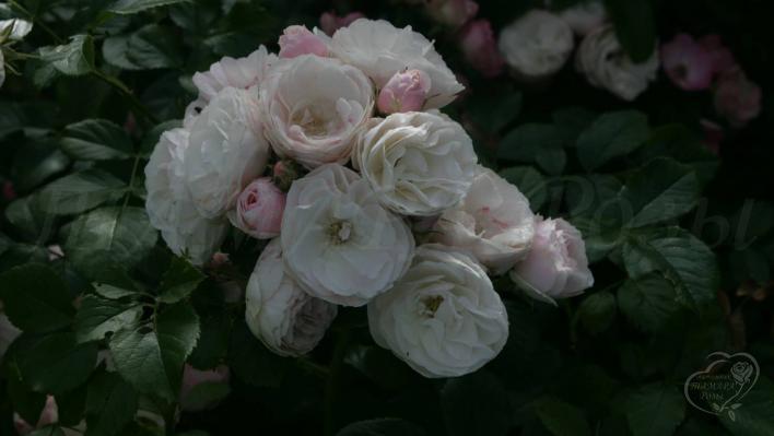 630_bouquet_parfait_2_708.jpg