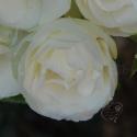 64_white_fairy_3_125.jpg