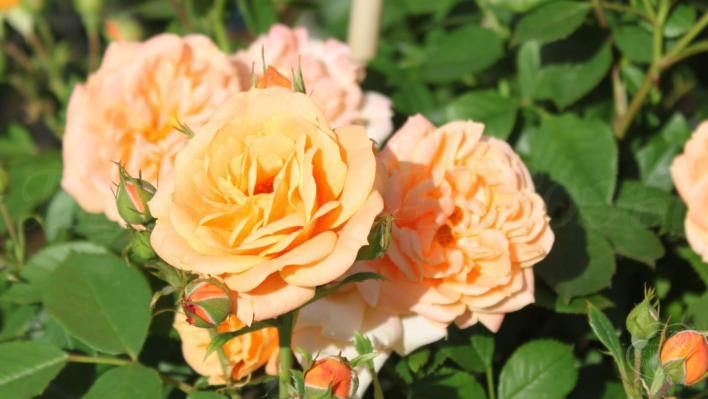 73_clementine_3_708.jpg