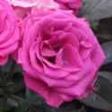 78_lovely_lydia_1_125.jpg