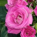 78_lovely_lydia__1_125.jpg