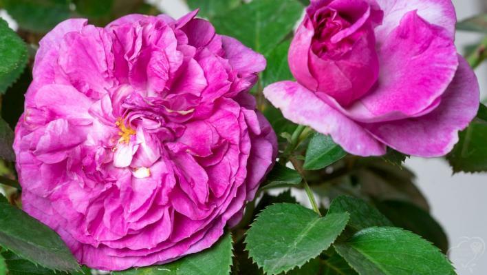 855_parfum_flower_circus_1708.jpg