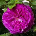 855_parfum_flower_circus_2125.jpg