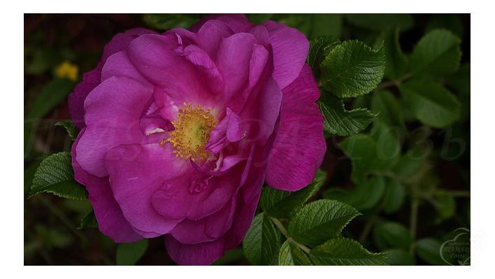 violeta_1_708.jpg
